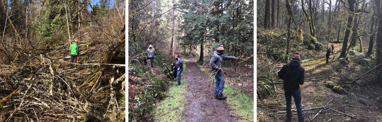 Volunteers cleaning up the trails at Hopkins Demonstration Forest after the winter storm damage